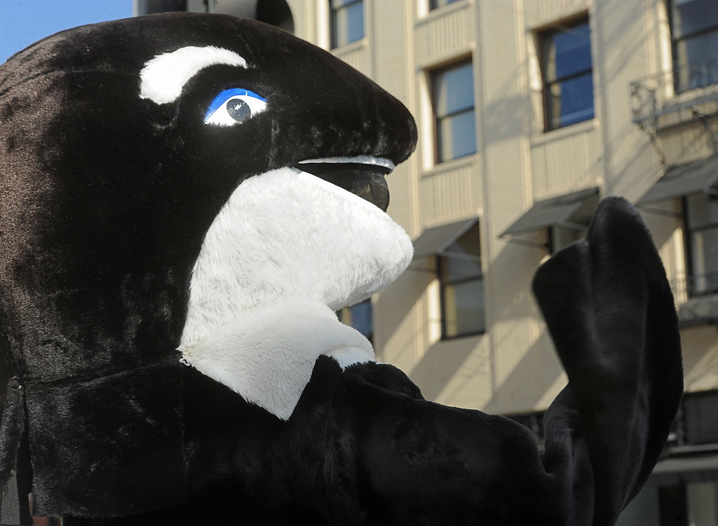 Description of . PETA members on Colorado Boulevard in Old Pasadena as they protested the SeaWorld float in this year's Rose Parade. Accompanied by activists wearing Orca costumes and holding signs that read,