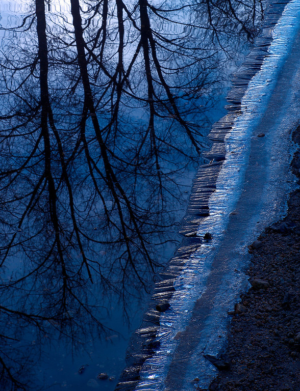 Description of . Reflections of trees with an icy shore of the South Fork Merced River in Yosemite Valley. (Photo by Gloria Fogler-Mancini)