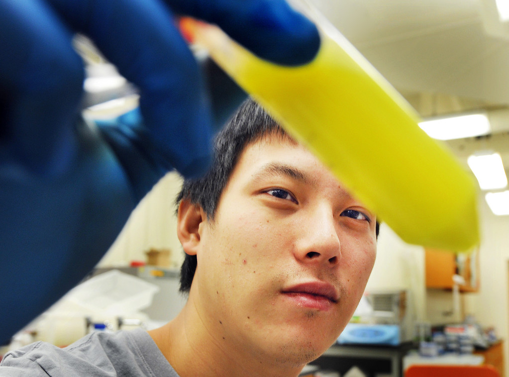Description of . Zachary Sun, Ph.D graduate student, examines a test tube of bacteria proteins, after a purfication process at the new  Division of Biology and Biological Engineering. There has been a new academic division unlike any other among its peer institutions, has combined the disciplines of biology and biological engineering into a new Division of Biology and Biological Engineering (BBE). Caltech students also returned to school on first-day-back-to-school Monday, September 30, 2013.(Photos by Walt Mancini/Pasadena Star-News)